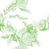 Nahtloses Muster des Vektors mit Zitrone und Minze Lizenzfreie Stockbilder