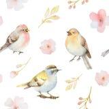 Nahtloses Muster des Vogel- und Frühlingsblumenaquarells Stockfotos
