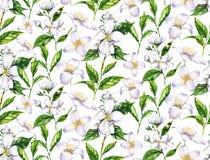Nahtloses Muster des von Hand gezeichneten Aquarells mit Jasminblumen und -teeblättern auf dem weißen Hintergrund Stockfotografie