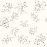 Nahtloses Muster des Weißdorns Lizenzfreie Stockfotografie