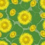 Nahtloses Muster, gelbe Blumen des Frühlinges Stockbild