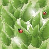 Nahtloses Muster - Grünblätter und -marienkäfer Lizenzfreie Stockbilder