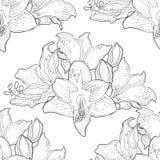 Nahtloses Muster ist hippeastrum Amaryllisblumen-Vektor illus lizenzfreie abbildung