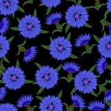Nahtloses Muster, Kornblumen auf einem schwarzen Hintergrund Stockfotos