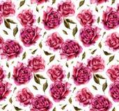 Nahtloses Muster mit Aquarellrosen auf weißem Hintergrund Lizenzfreie Stockfotos