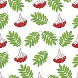 Nahtloses Muster mit Beeren und Blättern einer Eberesche für Gewebe, Tapeten, Geschenkverpackung und Einklebebuch Stockfotografie