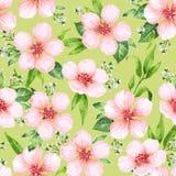 Nahtloses Muster mit blühendem Apfelbaum blüht auf grünem Hintergrund Endlose Beschaffenheit der Eleganzweinlese im Aquarell Lizenzfreie Stockbilder