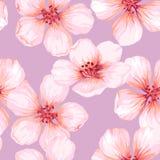 Nahtloses Muster mit blühendem Apfelbaum blüht auf rosa Hintergrund Endlose Beschaffenheit der Eleganzweinlese im Aquarell Stockfotografie