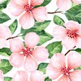 Nahtloses Muster mit blühenden Apfelbaumblumen Endlose Beschaffenheit der Eleganzweinlese in der Aquarellart auf Weiß Stockfotografie