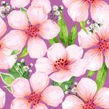 Nahtloses Muster mit blühenden Apfelbaumblumen Endlose Beschaffenheit der Eleganzweinlese in der Aquarellart auf Weiß Stockfotos