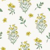 Nahtloses Muster mit Blütenanlage Würze Johannes s medizinischer botanischer Hand gezeichnete bunte Beschaffenheit des Vektors lizenzfreie abbildung