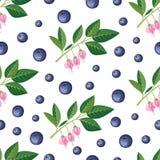 Nahtloses Muster mit Blaubeeren, Zweige, Blumen Vektor vektor abbildung