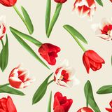 Nahtloses Muster mit den roten und weißen Tulpen Schöne realistische Blumen, Knospen und Blätter Stockbilder