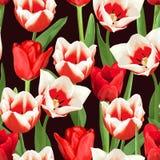 Nahtloses Muster mit den roten und weißen Tulpen Schöne realistische Blumen, Knospen und Blätter Lizenzfreies Stockbild