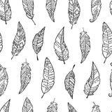 Nahtloses Muster mit einfarbige Hand gezeichneten aufwändigen Federn stock abbildung