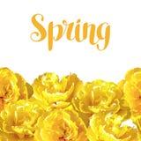 Nahtloses Muster mit flaumigen gelben Tulpen Schöne realistische Blumen und Knospen Lizenzfreies Stockfoto