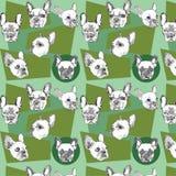 Nahtloses Muster mit französischer Bulldogge auf einem grünlichen Hintergrund Stockfotografie