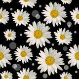 Nahtloses Muster mit Gänseblümchenblumen Stockfotos