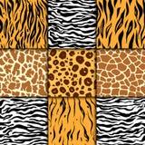 Nahtloses Muster mit Gepardhaut Es kann für Leistung der Planungsarbeit notwendig sein Bunter Zebra- und Tiger-, Leopard- und Gir Stockbilder