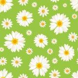 Nahtloses Muster mit Gänseblümchenblumen auf Grün. Vect Lizenzfreie Stockfotos
