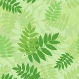 Nahtloses Muster mit grünen Eberescheblättern. Stockfoto