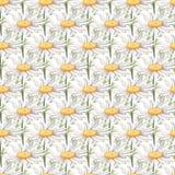 Nahtloses Muster mit großen Kamillenblumen lizenzfreie stockfotos