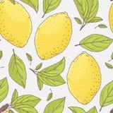 Nahtloses Muster mit Hand gezeichneter Zitrone und Blättern Gekritzelfrucht für Paket oder Küchendesign Stockfotos