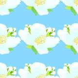 Nahtloses Muster mit Jasmin auf einem blauen Hintergrund Vektor illus Stockfotos