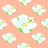 Nahtloses Muster mit Jasmin auf einem rosa Hintergrund Vektor illus Stockbilder