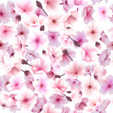 Nahtloses Muster mit Kirschblüte, blühender Orientale, Sakura Flowering Spring Festival Hanami Lizenzfreie Stockbilder