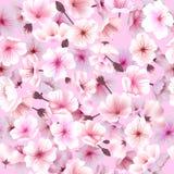 Nahtloses Muster mit Kirschblüte, blühender Orientale, Sakura Flowering Spring Festival Hanami Lizenzfreies Stockfoto