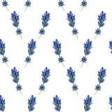 Nahtloses Muster mit Lavendelblumen im Aquarell vektor abbildung