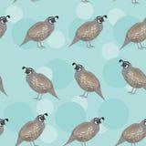 Nahtloses Muster mit lustigem nettem Wachtelvogel auf a Lizenzfreie Stockbilder