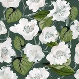 Nahtloses Muster mit Magnolienzusammenfassung blüht auf Schwarzem Lizenzfreie Stockbilder