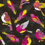 Nahtloses Muster mit mehrfarbigen Vögeln Stockbild