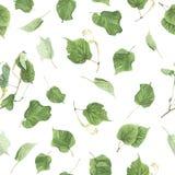 Nahtloses Muster mit Niederlassungen und Blättern der Linde, Aquarellmalerei Stockfotografie