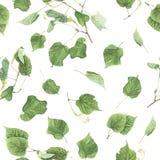 Nahtloses Muster mit Niederlassungen und Blättern der Linde, Aquarellmalerei Lizenzfreie Stockfotografie