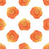 Nahtloses Muster mit orange Ranunculusblumen Lizenzfreie Stockfotografie