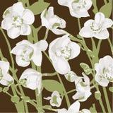 Nahtloses Muster mit Orchideen Lizenzfreie Stockfotografie