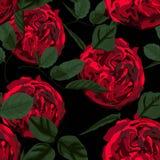 Nahtloses Muster mit Pfingstrose der roten Rosen und grünen Blättern Vervollkommnen Sie für Hintergrundgrußkarten und Einladungen lizenzfreie abbildung