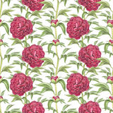 Nahtloses Muster mit Pfingstrosenblumen Stockfoto