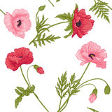 Nahtloses Muster mit rosa und roter Mohnblume blüht Lizenzfreies Stockfoto
