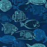 Nahtloses Muster mit Sammlung tropischen Fischen Weinlesesatz Hand gezeichnete Meeresfaunas Stockfoto