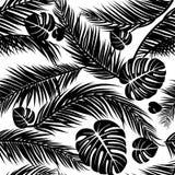 Nahtloses Muster mit Schattenbildern der Palme verlässt im Schwarzen auf weißem Hintergrund Stockfotos