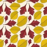 Nahtloses Muster mit Ulmen- und Weißdornherbstlaub stock abbildung