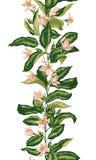 Nahtloses Muster mit vertikaler Linie der Zitrusfruchtniederlassung mit bloomi stock abbildung