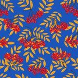 Nahtloses Muster mit Vogelbeere verzweigt sich auf einen blauen Hintergrund Stockbild