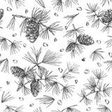 Nahtloses Muster mit Zeder Niederlassungen und pinecones lokalisierte auf weißem Hintergrund vektor abbildung