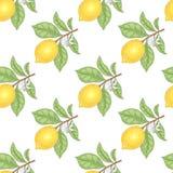 Nahtloses Muster mit Zitronen Lizenzfreie Stockbilder