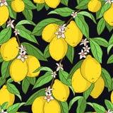 Nahtloses Muster mit Zitronen Stockfotografie